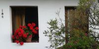 Leggi tutto: La sinodalità della vita